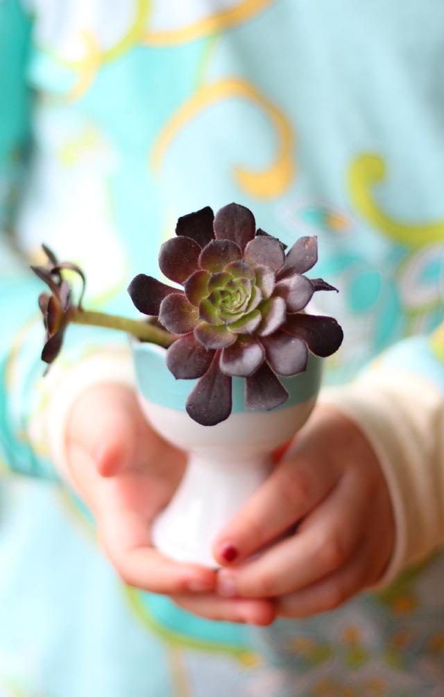 mini-succulent