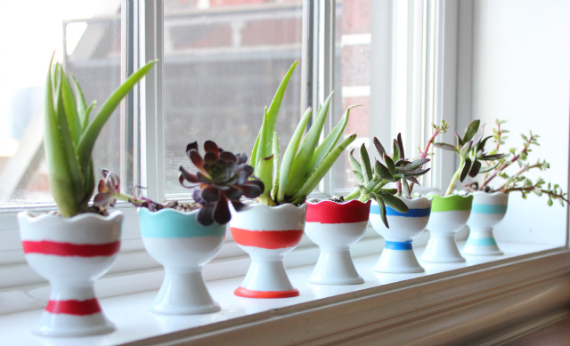 succulent-garden