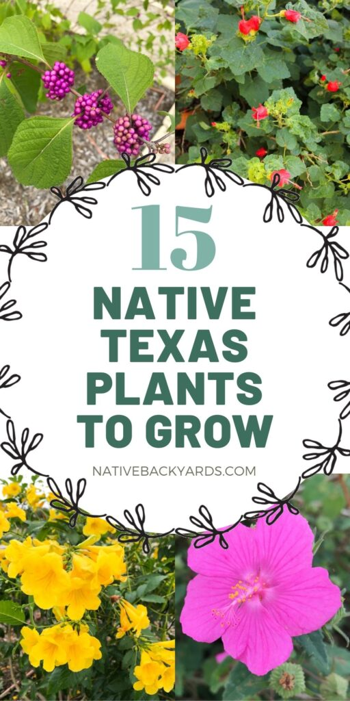 Top 15 Texas native plants to grow in your yard
