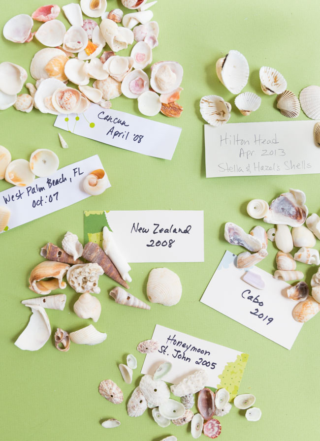 Ideas for seashell crafts