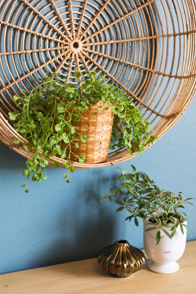 Plants for gym decor